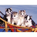 Puzzle Catei Husky, 500 Piese